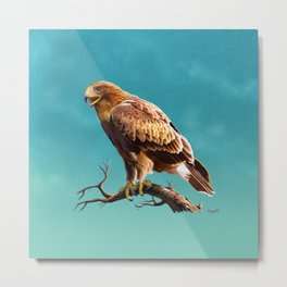 Booted Eagle Metal Print