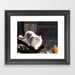 The Beautiful Maine Coon Dilute Calico Framed Art Print