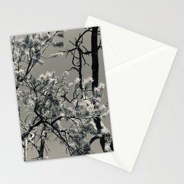 Calm Trees and Sky In Colorado Stationery Cards
