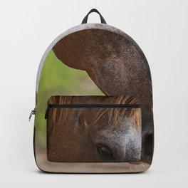 Horse Family Backpack