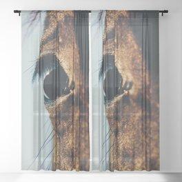 Horse photography, horses fine art, nature lovers, wild stallion, hasselblad Sheer Curtain