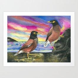 Common Myna Birds Art Print