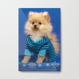 Pomeranian Puppy Stands in Pajamas in a Blue and White Snowflake Basket for the Winter Holidays Metal Print