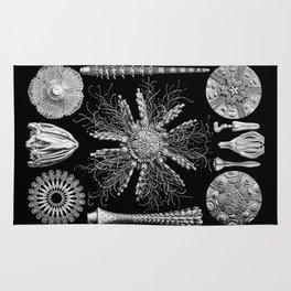 Sand Dollars (Echinidea) by Ernst Haeckel Rug