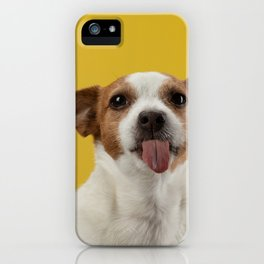 Jack Russell Terrier 7 iPhone Case