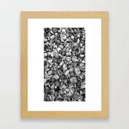 Seashells from Long Island Sound - Black & White Framed Art Print