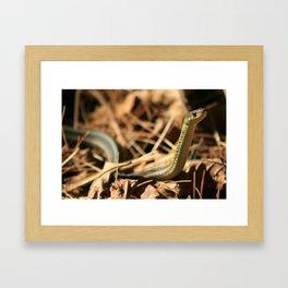 Garter Snake  Framed Art Print