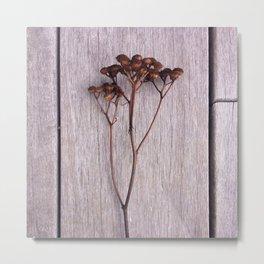 Newport Bloom III Metal Print