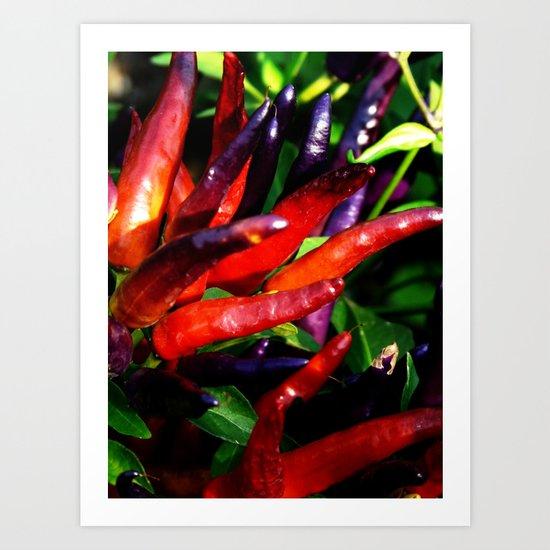Rainbow Peppers Art Print