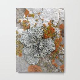 Untitled 5. Metal Print