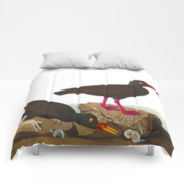 White-legged Oyster-catcher, or Slender-billed Oyster-catcher Bird Comforters
