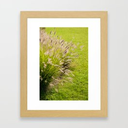 Grass clump Pennisetum alopecuroides Framed Art Print