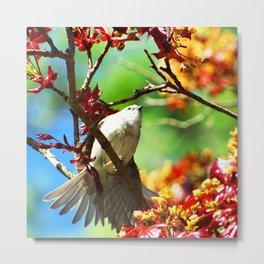 Colors of Spring Bird Metal Print