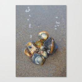 Sea pearls Canvas Print