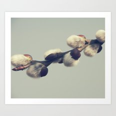 Fluffy gray Art Print