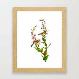 Chestnut Sided Warbler Bird Framed Art Print