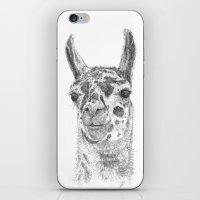 llama iPhone & iPod Skins featuring Llama by Condor