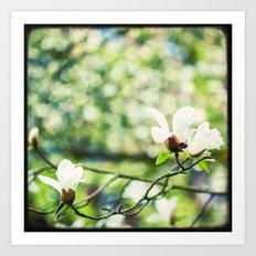 Magnolia en Fleurs Art Print
