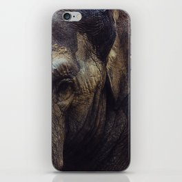 Elephant portrait iPhone Skin