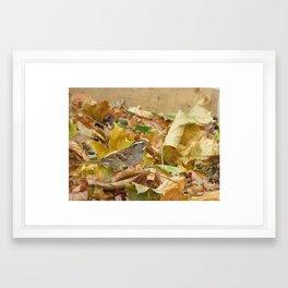 Sparrow Camouflage Framed Art Print