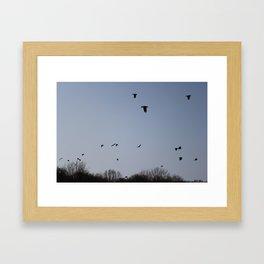 Flying birds. Framed Art Print