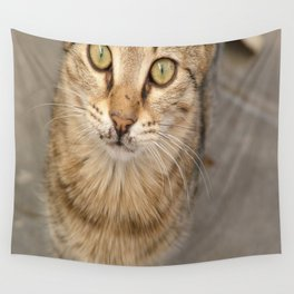 Eye Contact With A Stray Tabby Cat Wall Tapestry