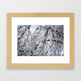 Asian Cherry Blossom Tree Framed Art Print