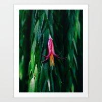 Fuschia Flower Art Print