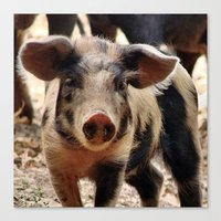 piglet Canvas Prints featuring Young Piglet by MehrFarbeimLeben