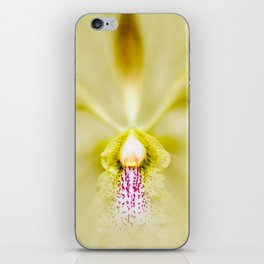 Yellow encyclia orchid flower. iPhone Skin