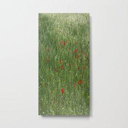Poppy Field And Springtime Hay Meadow  Metal Print