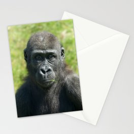 Gorilla Baby Shufai With A Piece Of Grass In His Mouth Stationery Cards