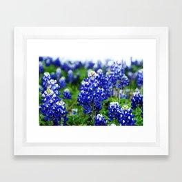 Texas Blue Bonnets Framed Art Print