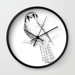 American Kestrel pencil front on Wall Clock
