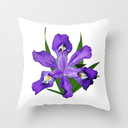 Dwarf crested Iris, Iris cristata on white Throw Pillow