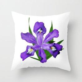Dwarf crested Iris, Iris cristata on white Throw Pillow