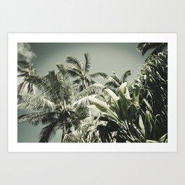 Kuau Hawaii Tropical Palms Sea Green Paia Maui Art Print