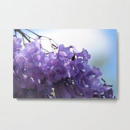 Flowering Jacaranda Tree Metal Print