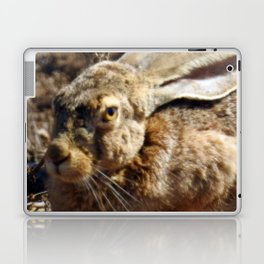 Jackrabbit Laptop & iPad Skin
