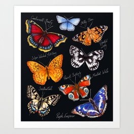 Butterflies On Black Art Print