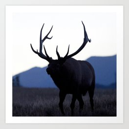 Watercolor Elk Bull 52, Estes Park, Colorado, Walk Slowly Backwards Art Print