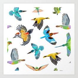 Colourful birds of Singapore Art Print