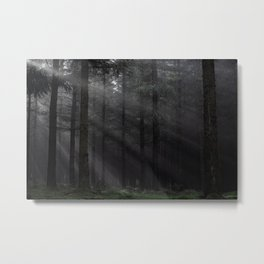 In the forest darkness - Kessock, Highlands, Scotland Metal Print