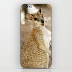 Smiling Kangaroo iPhone & iPod Skin