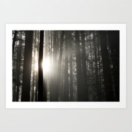 Morning Light in the Forest Art Print