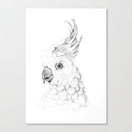 Sulphur Crested Cockatoo - Black and White Portrait Canvas Print