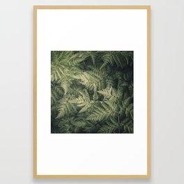 SHADED GREEN FERN Framed Art Print