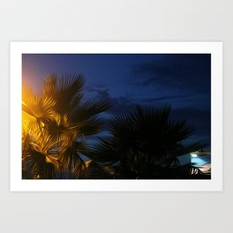 palm tree night Art Print