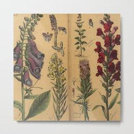 Naturgeschichte des Pflanzenreichs, Eßlingen 1870 Metal Print