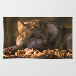 A wolf lying in the evening sun Rug